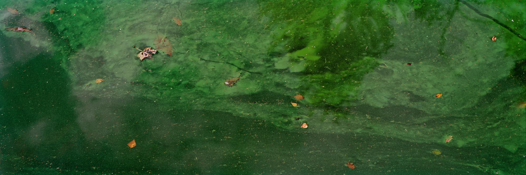 Blackbrook, Mount Saint Bernard Abbey, England, Great Britain, Großbritannien, Wasser, See, Algen, abstrakt, Fluss, fließend, Universum, Spiegelungen, grün, gelb, braun, analog, analoge Fotografie, Großformat