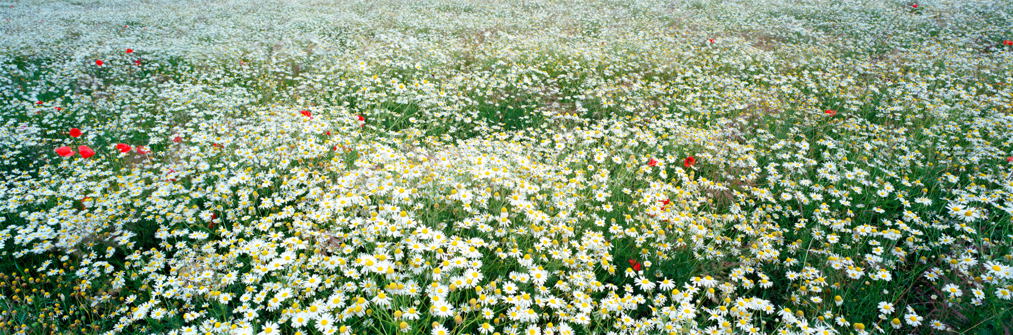 Brachland, Landschaft, Natur, analoge Fotografie, Großformat, Panoramafotografie, Markus Bollen, 6x17, grün, Leben, Wachstum, Frieden, Ruhe, Wiese, Rasen, Langzeitbelichtung,