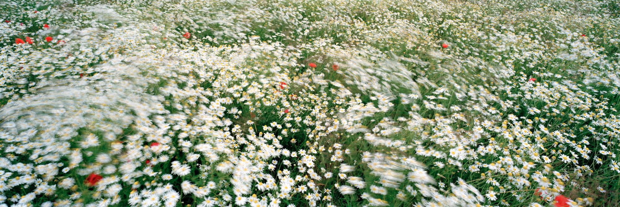 Brachland, Landschaft, Natur, analoge Fotografie, Großformat, Panoramafotografie, Markus Bollen, 6x17, grün, Leben, Wachstum, Frieden, Ruhe, Bewegung, Langzeitbelichtung