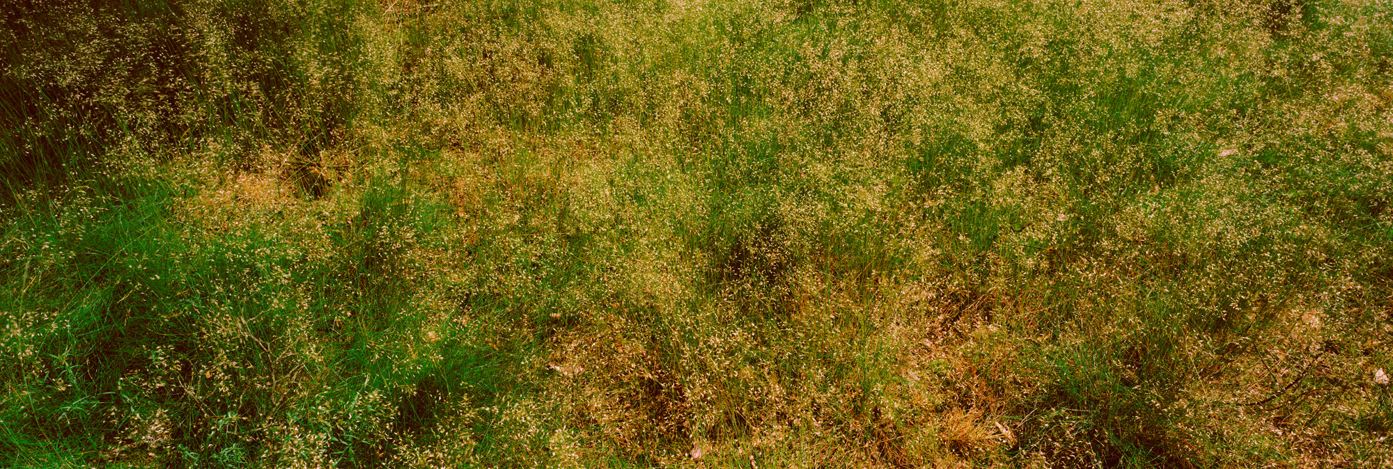 Brachland, Landschaft, Natur, analoge Fotografie, Großformat, Panoramafotografie, Markus Bollen, 6x17, grün, Leben, Wachstum, Frieden, Ruhe, Gras, Wiese