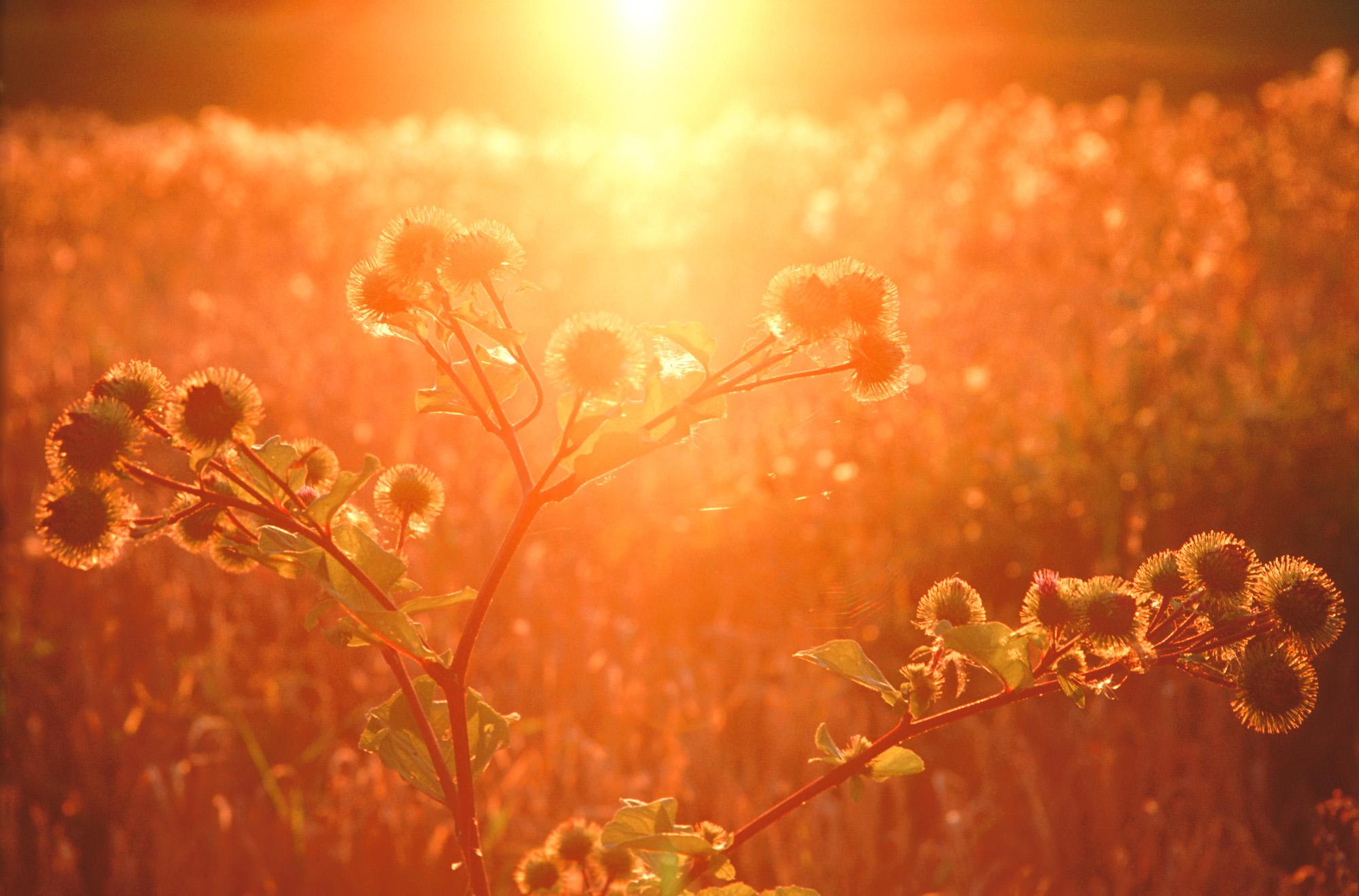 Masuren, Polen, Sonnenuntergang, Weite, Ferne, orange, rot, gelb, Disteln,