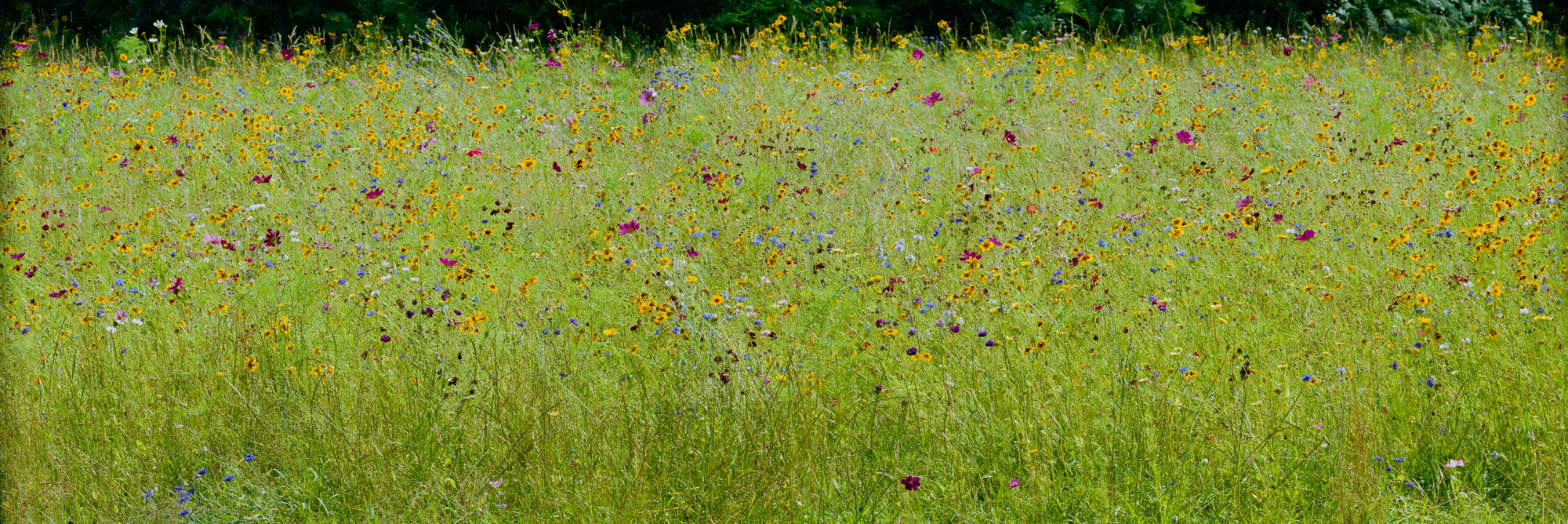 Die grüne, von bunten Blumen gesprenkelte, Bienenweide des Schloss Dyck.