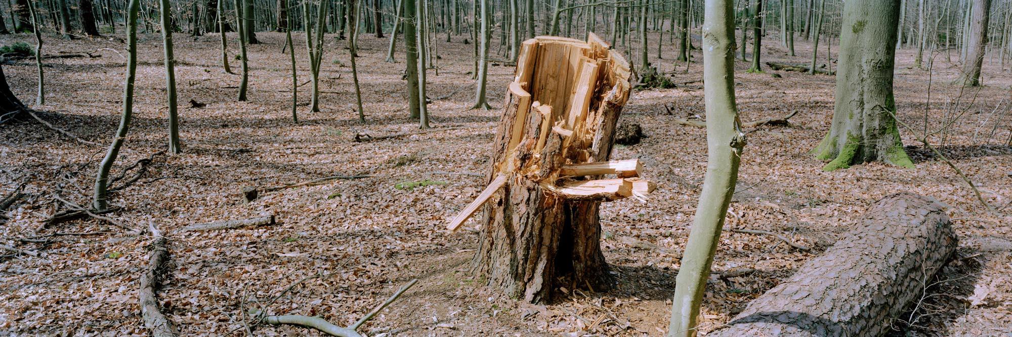 2153-06 Baumstumpf im Gierather Wald
