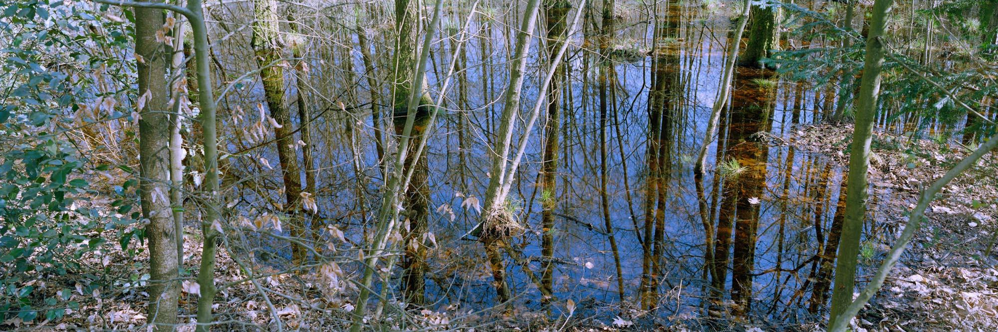 2155-06 Feuchtbiotop im Gierather Wald