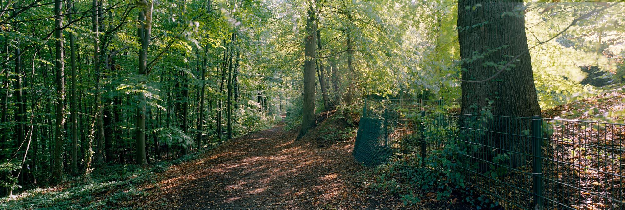 Wald in GL Wald in Bergisch Gladbach