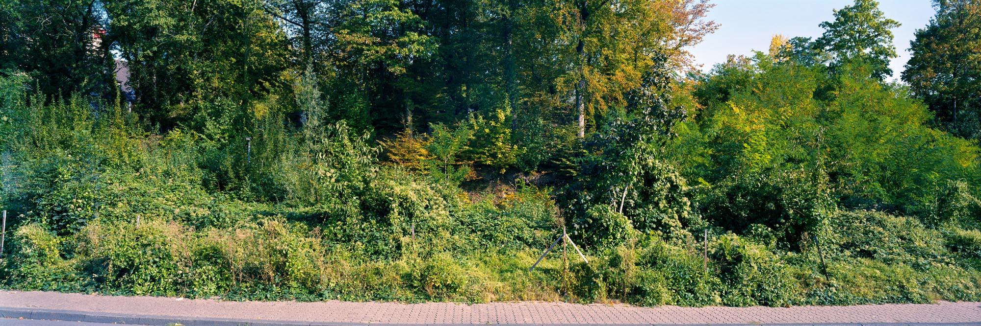 Wald in GL