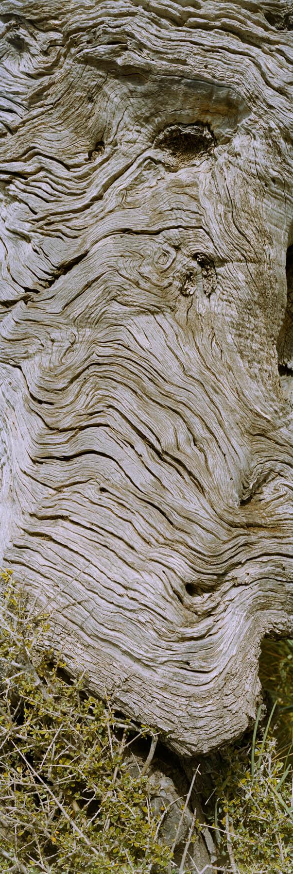 large format photography, Grossformatfotografie, Grossformatphotographie, Fotografie, Photographie, photography, 6x17, Macro, Makro, Rinde, bark, tree, Baum, Borke, Flechten, lichen, Holz, Wood, braun, brown